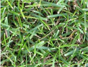 What Grass Is Right for Me?