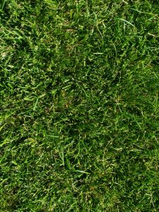 The Fundamentals of Zoysia Grass