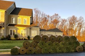 Go Green with an Environmentally-Friendly Lawn