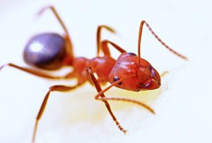 Lawn Care Tips: Dealing with Fire Ants