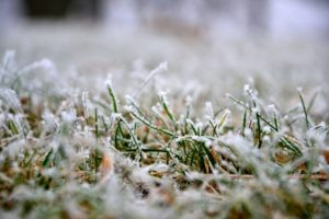 4 Winter Lawn Care Tips