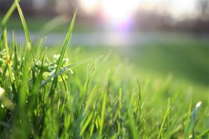 Lawn Care Tips: Dealing with Red Thread Disease