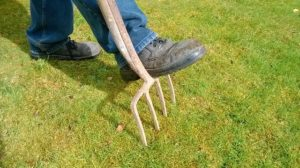 How to Aerate Your Lawn and Fight Off the Threat of Thatching