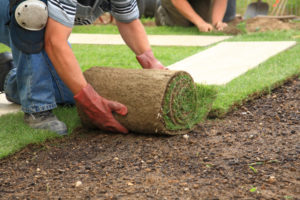 Comparing Sod and Seeds: Which One Will Be Best For Your Needs?