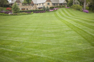 How to Take Better Care of Your Lawn Next Year