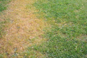 How Can You Tell if Your Grass is Actually Dead?