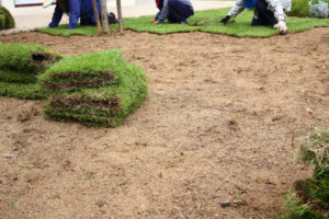 Great Tips for Working with a Local Sod Supplier