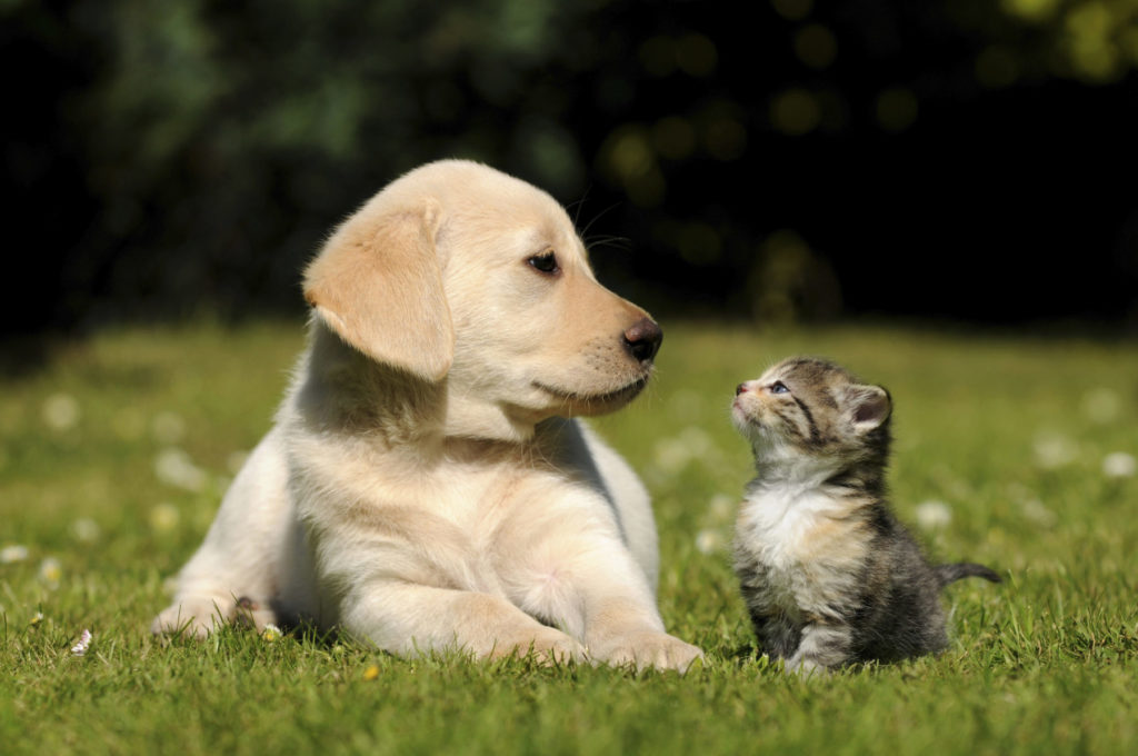 How to Manage Weed Control While Keeping Your Pets Safe