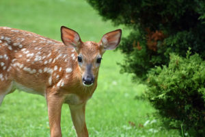 4 Quick Tips for Protecting Your Landscape Against Troublesome Critters