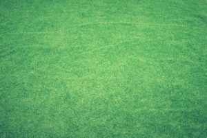 Here are some suggestions on properly caring for your Zoysia sod lawn for a perfectly manicured yard.