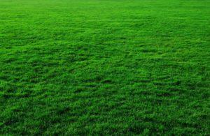 quantico creek sod farms turfgrass sod