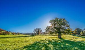 quantico creek sod farm drought tolerant sod