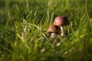 quantico creek sod farm grass mushrooms
