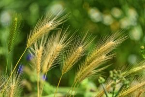 4 Tips for Controlling Weed Quantico & Creek s in Your Garden?