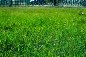 3 Ways To Prevent Your Dog From Damaging Your Sod Quantico & Creek Sod